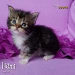 Hemi3276 copy